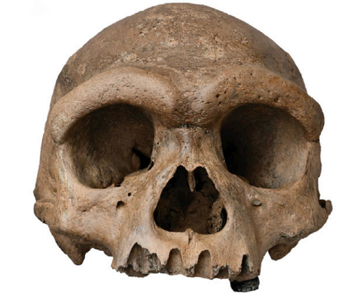 """季强教授:""""龙人""""化石或将改写人类演化史"""