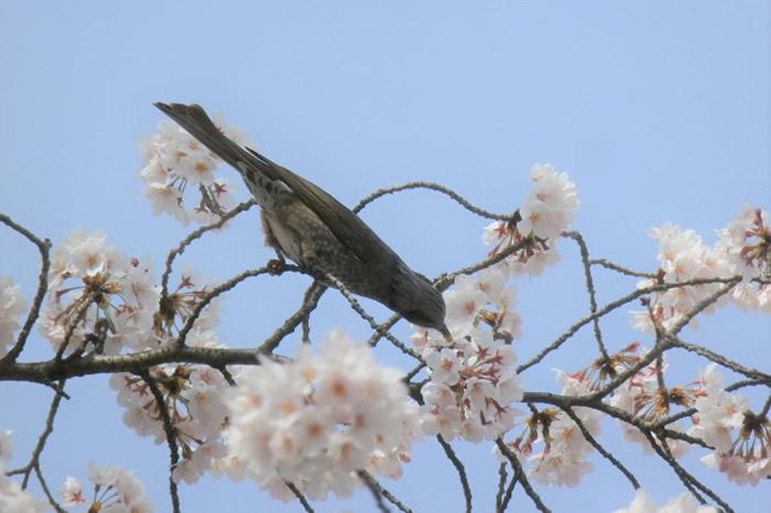 《科学》:研究揭示鸟类甜味感知的早期起源