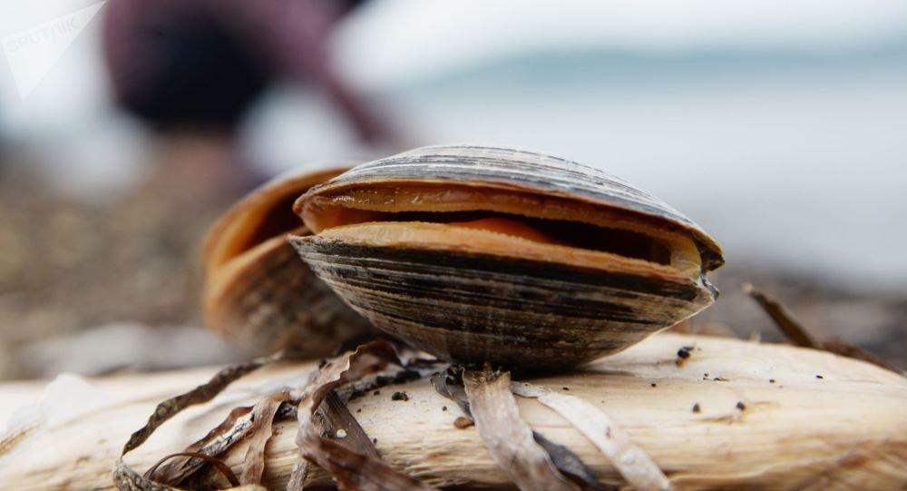 英国议会收到禁止烹饪活海鲜法案 应先将海鲜击晕或冻晕