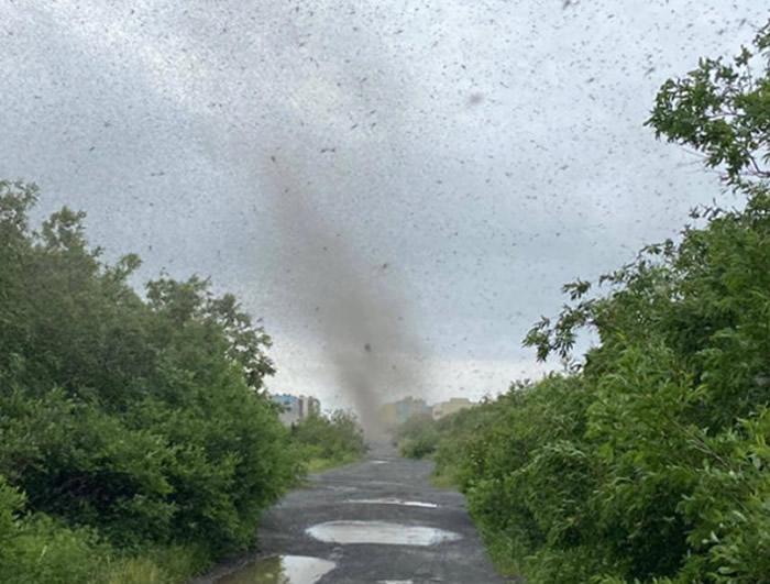 俄罗斯堪察加半岛东海岸惊现蚊子龙卷风 昆虫学家:为了交配