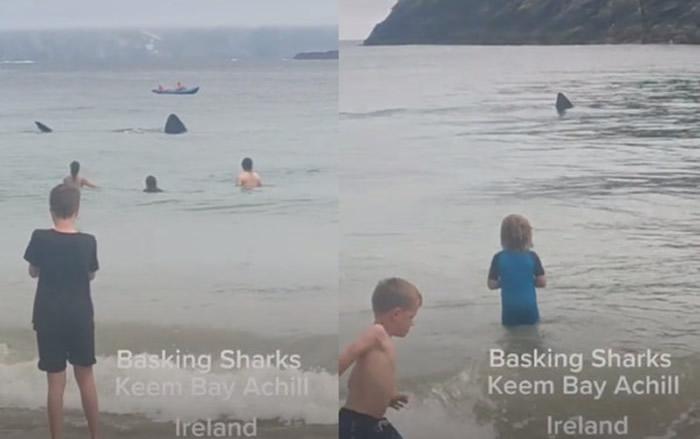 爱尔兰一处海滩上挤满游客 两条巨大鲨鱼突然靠近