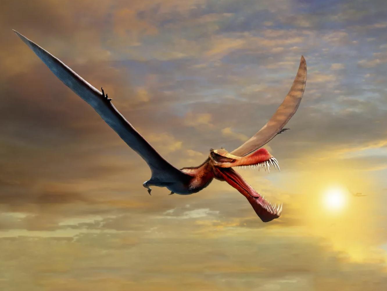 澳大利亚发现一种翼展有7米的新翼龙化石Thapu