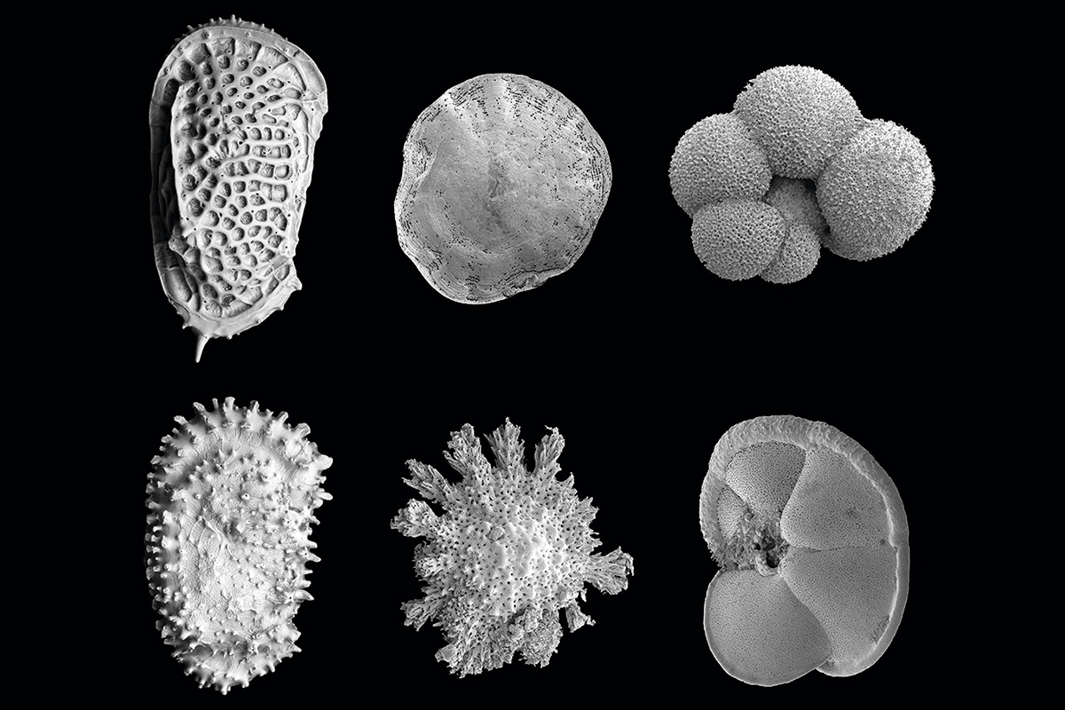 新研究披露在新生代较温暖的海洋孕育了更多具有类似功能的物种