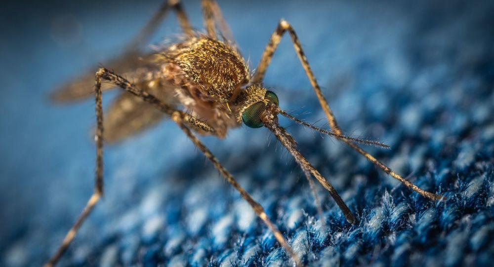俄罗斯生物学家称中国辐射灭蚊法安全有效 但可能造成负面后果