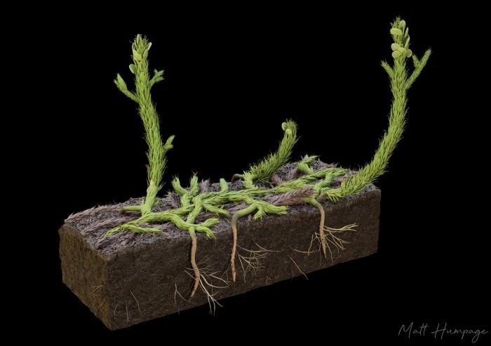 苏格兰发现的植物化石揭示已知最早的根系形式的发展