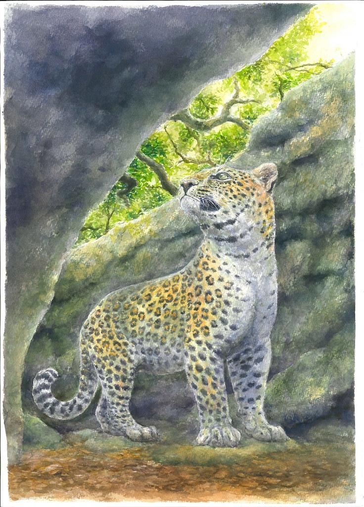 花豹生态复原图,由李建兴绘制。图片来源:科博馆