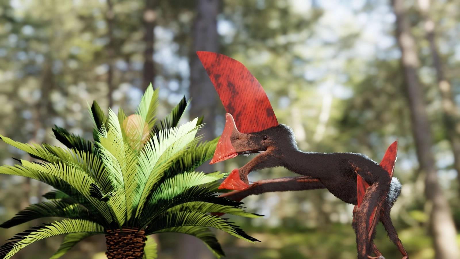 新的化石骨架告诉我们,这种翼龙可能只能飞很短的距离,因为它们有一个巨大的头冠。绘制:VICTOR BECCARI