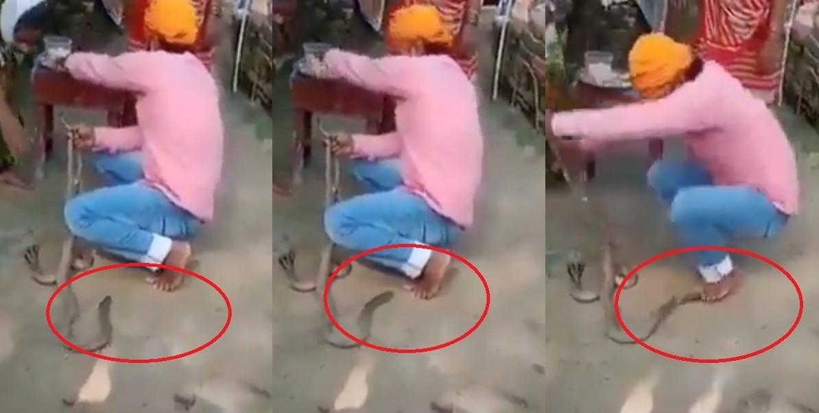 印度兄妹节有10年经验的25岁弄蛇人表演时被毒蛇咬死
