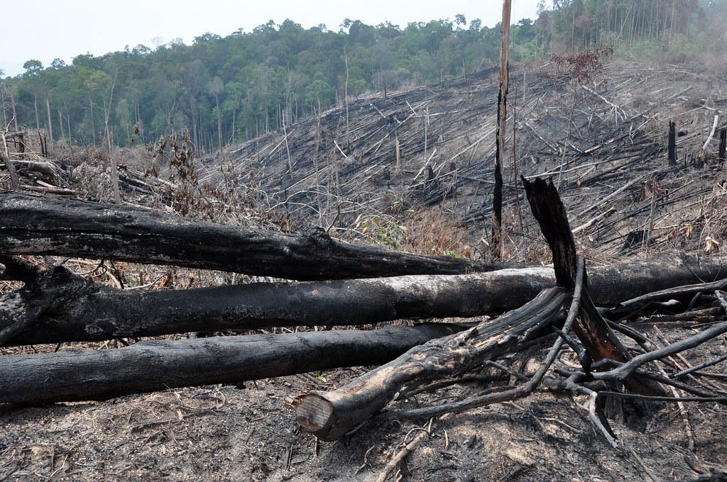 到2019年,每年森林流损总量的42%发生在高海拔地区,森林流损范围的边界以每年大约15公尺的速度往上移动。照片来源:Donald Bason/USAID FA