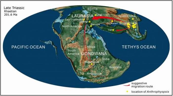 晚三叠世大网羽叶属的全球分布及其可能的辐射迁移路线