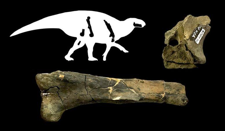 新研究描述8500万年前居住在阿巴拉契亚的两种恐龙:草食性鸭嘴龙和肉食性霸王龙