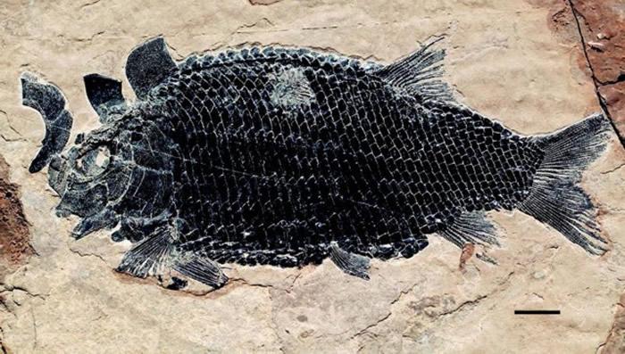 罗平强壮鱼。罗平县委宣传部供图