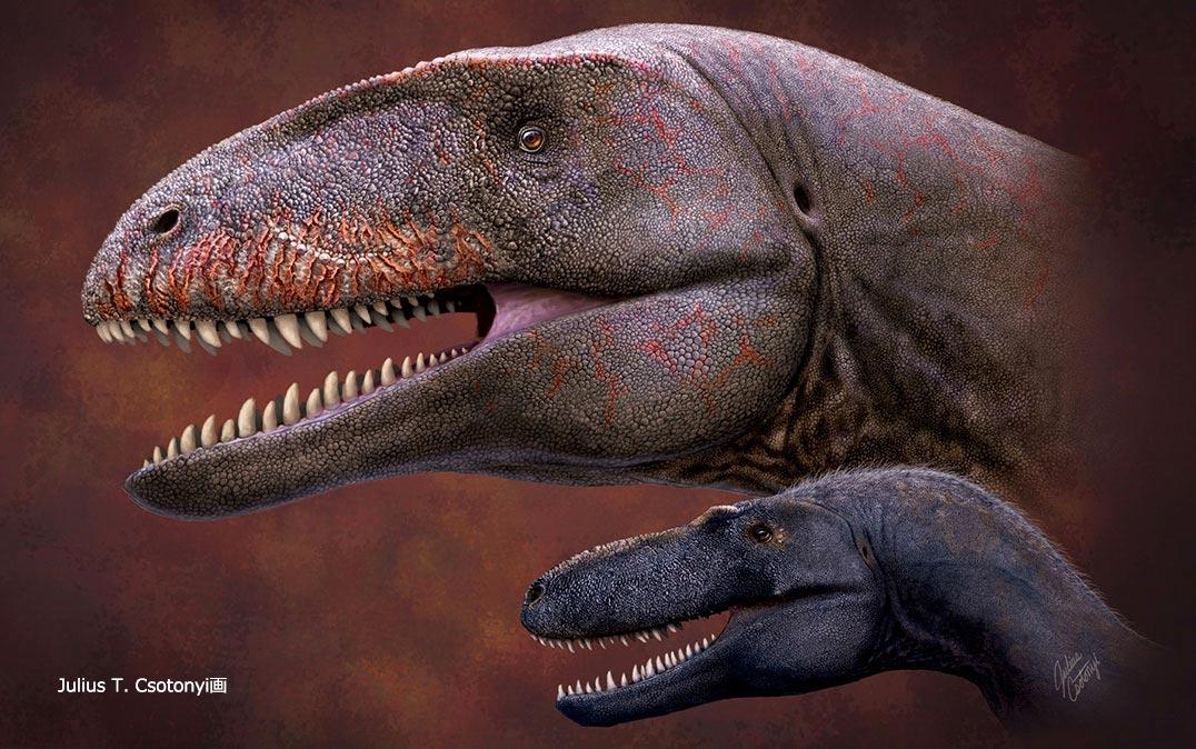 霸王龙之前最强的恐龙:乌兹别克斯坦发现的鲨齿龙Ulughbegsaurus uzbekistanensis