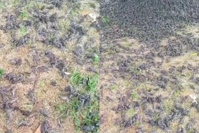 滥用杀虫剂导致?印尼峇里岛大雨后墓地发现大量麻雀死亡 尸体堆积如山