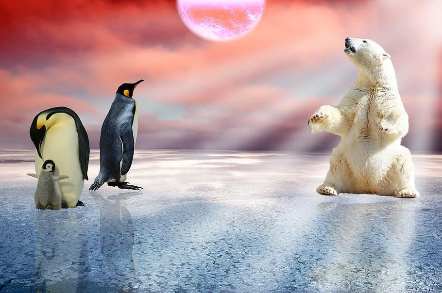 企鹅可能是外星生物?粪便中发现在金星自然存在的化学物质