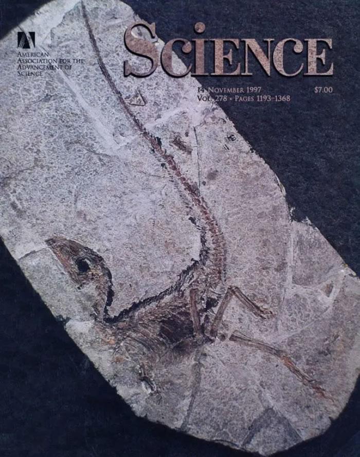 1997年美国Science杂志首次报道中华龙鸟