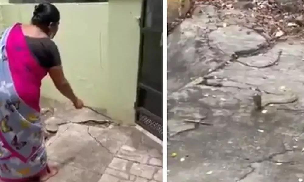 印度孔巴托一名妇女见到眼镜蛇闯入屋内 不但没有惊叫反而用温和的方式请它离开