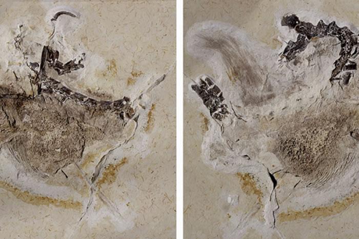 巴西古生物学界怒了!德国卡尔斯鲁厄自然历史博物馆拒绝归还非法获取的恐龙化石