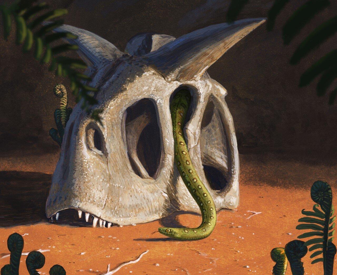 小行星撞击地球在白垩纪末消灭了恐龙 蛇却进化了(Credit: Joschua Knüppe)