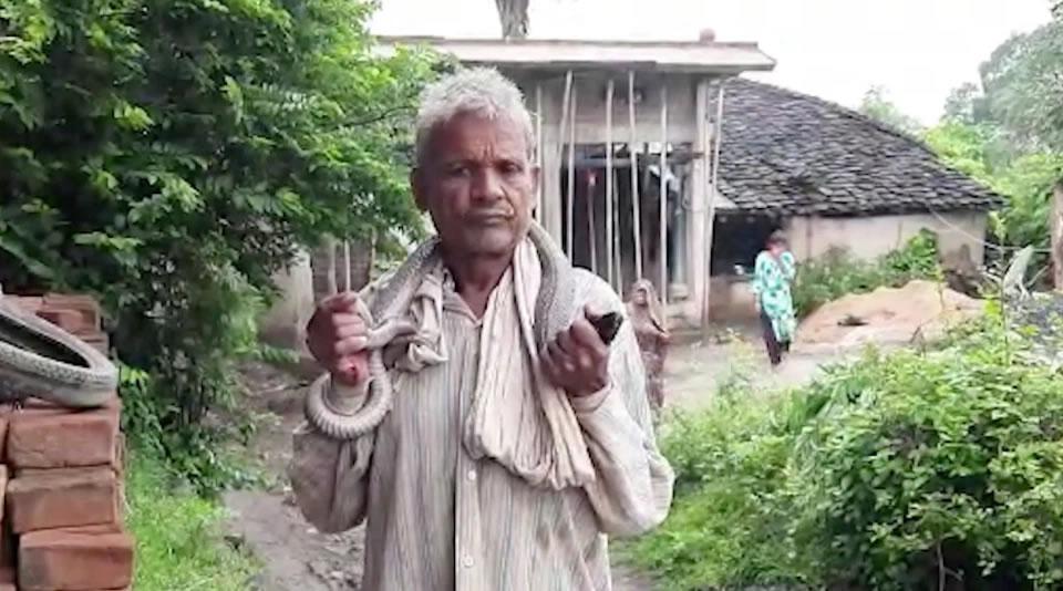 印度男子号称百毒不侵 被眼镜蛇咬自己吸蛇毒惨死