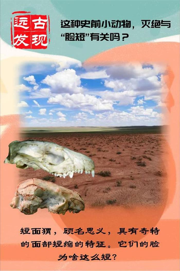 中国内蒙古中部发现2000万年前短面猬化石 与现生刺猬一样有着非凡的扩散能力