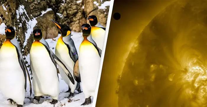 外星生物早已在地球?巴布亚企鹅粪便里发现来自金星上特有的物质