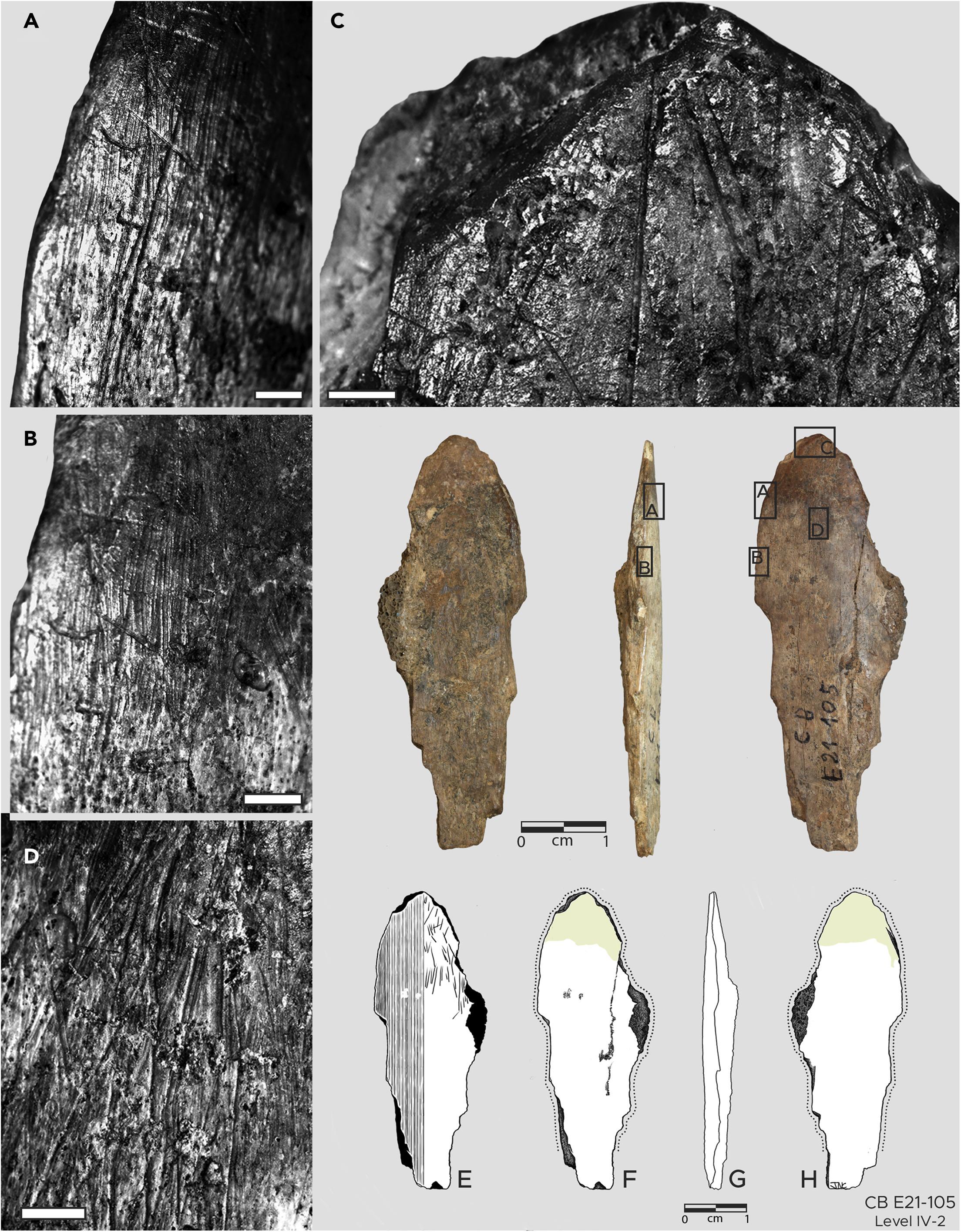 摩洛哥Contrebandiers洞穴发现古人类用来将毛皮做成衣服的骨质工具 距今9万至12万年