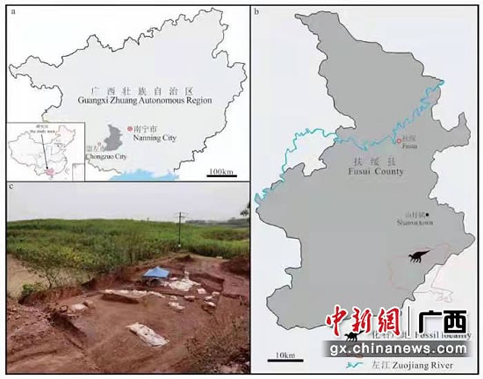 《地球学报》:中国南方首次发现的基干禽龙类化石新属种——广西那派龙
