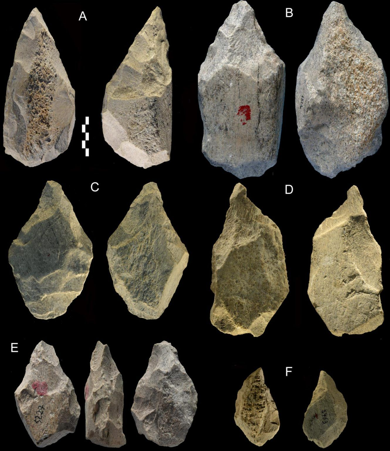 意大利考古发现40万年前古人类已利用大象骨头制作各种工具