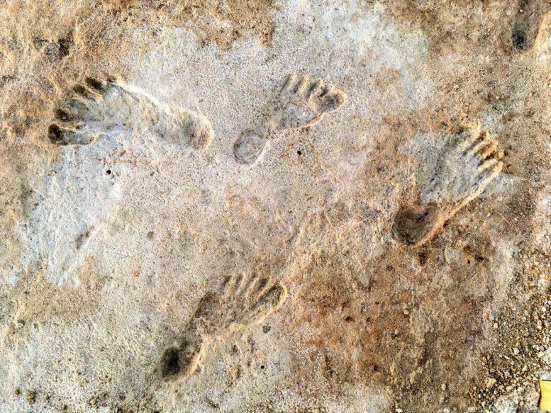 美国新墨西哥州白沙国家公园发现的23000年前脚印化石为美洲人类活动提供最早证据