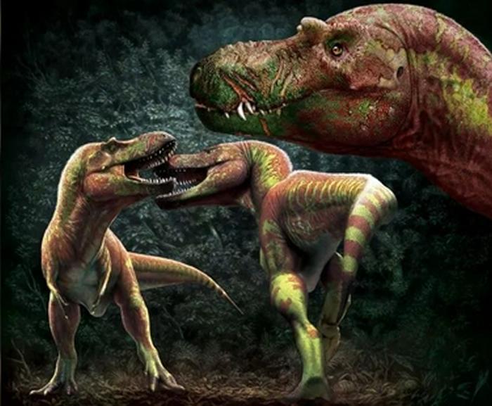 加拿大皇家泰瑞尔博物馆研究揭示霸王龙之间的争斗方式——互相撕咬脸部