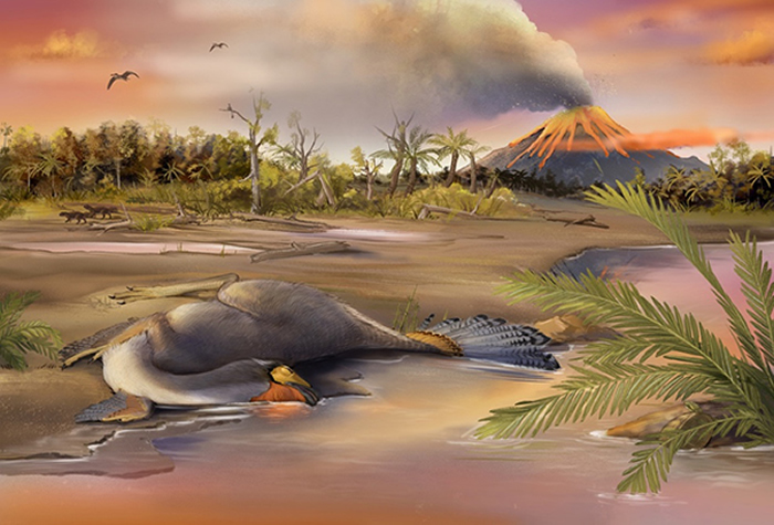 来自热河生物群的尾羽龙复原图(郑秋旸 供图)