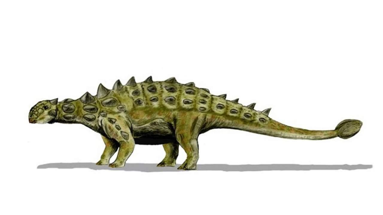 英国自然历史博物馆宣布在摩洛哥发现新的甲龙物种