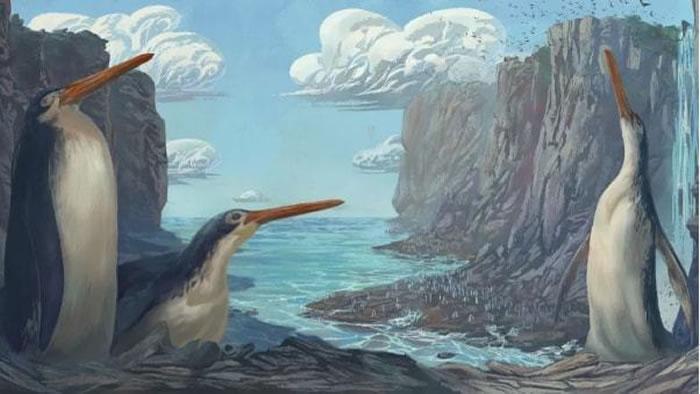 新西兰境内发现一种远古巨型企鹅化石 生活在2700万-3500万年前