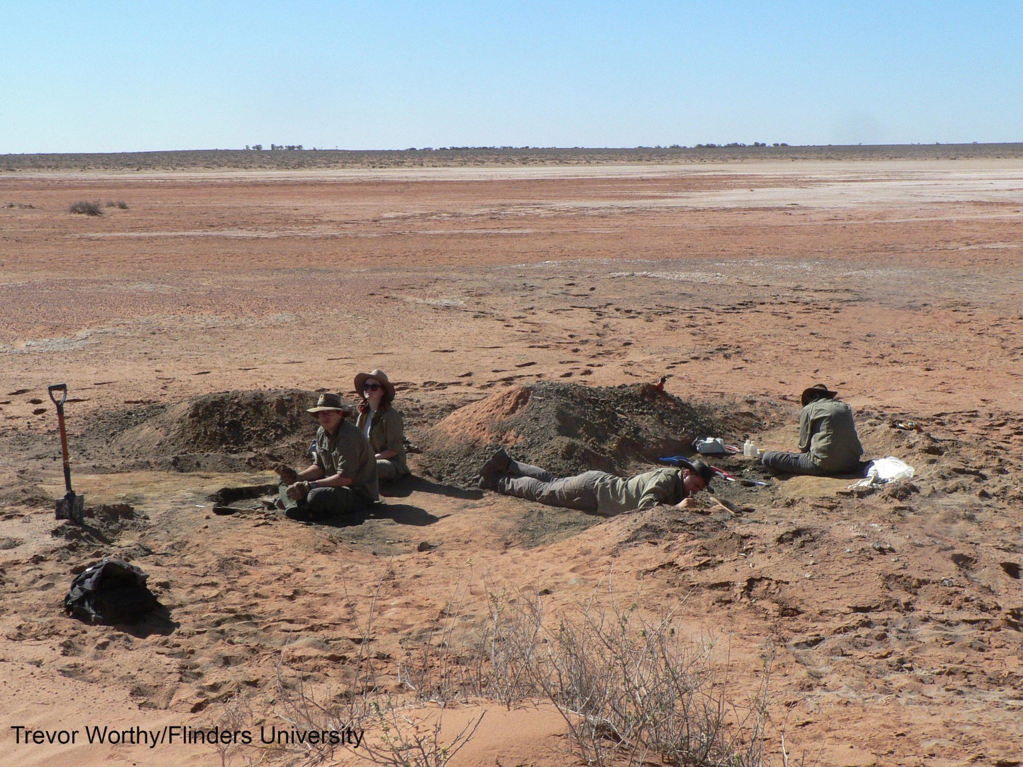 澳大利亚发现2500万年前的鹰化石——Archaehierax sylvestris